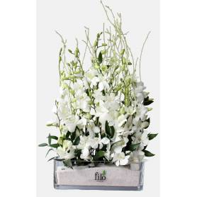 Composition With White Orchids  - 1