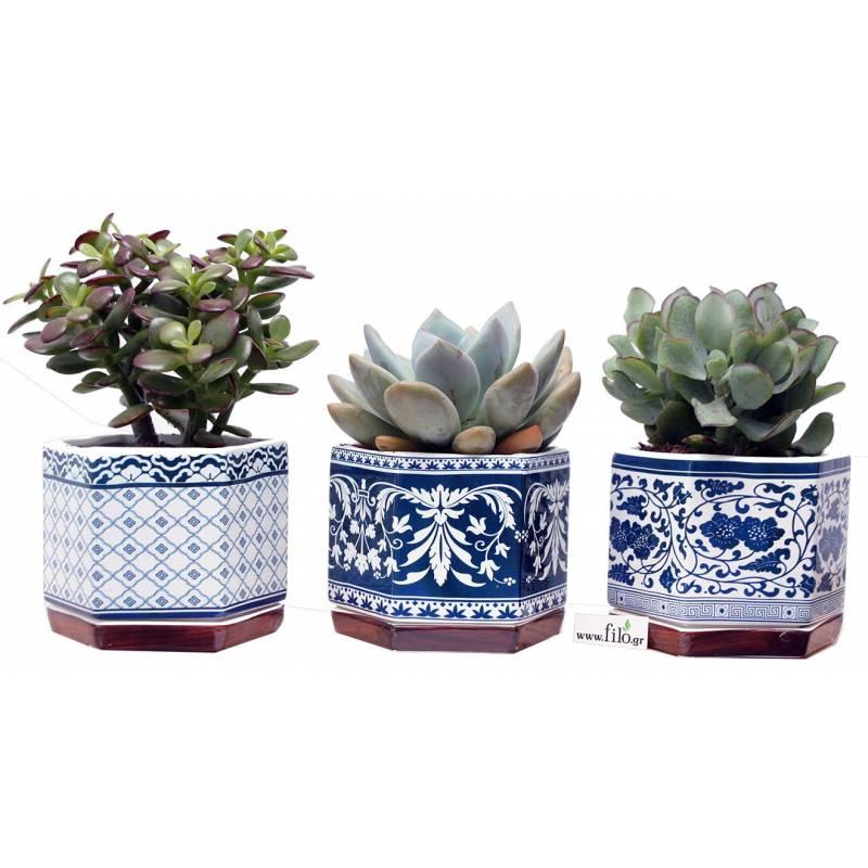 Succulents in Ceramics  - 1