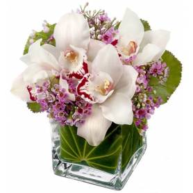 Orchid In Cube Glass Pot  - 1