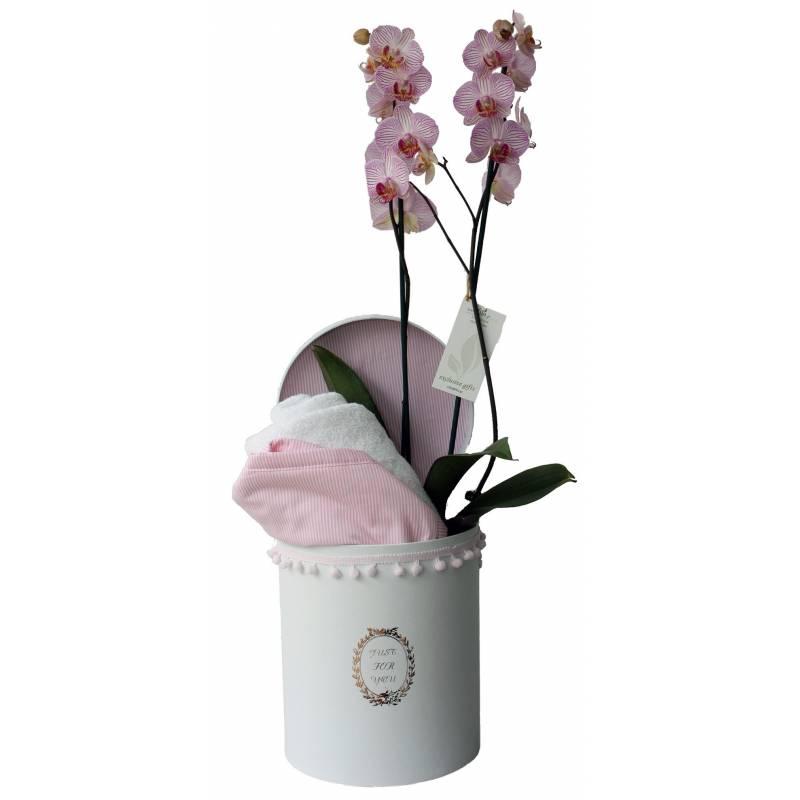100 ροζ τριαντάφυλλα
