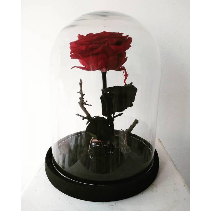 Forever Rose XL  - 1