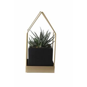 Zebra Plant in Metalic Frame