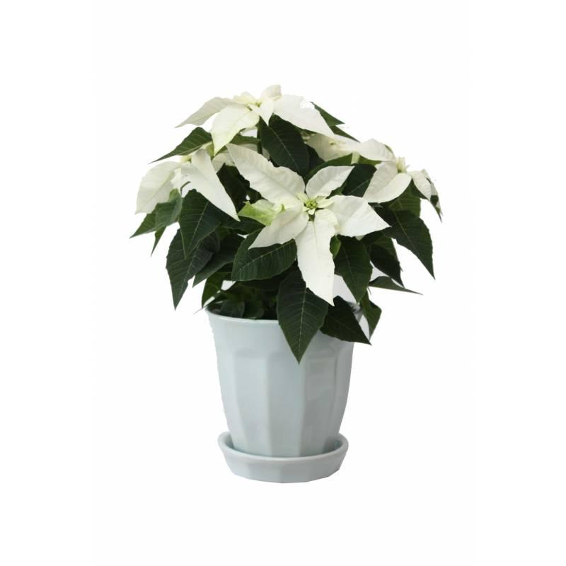 send flowers in Greece filo.gr