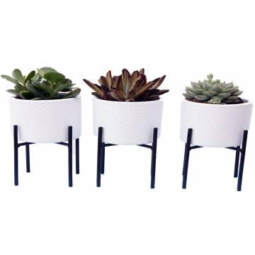 Succulents in Ceramics  - 2