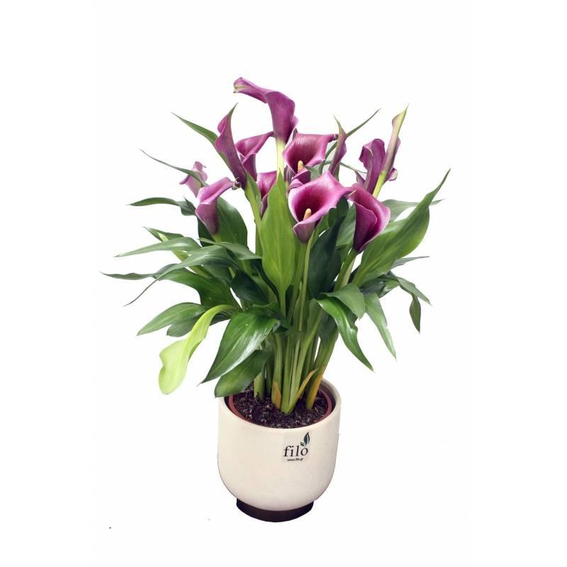 """Bouquet """"Dimitra"""""""